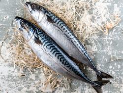 pesce azzurro - serata sospesa fino alla riapertura serale dei ristoranti