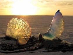 degustazione crudita'del mare