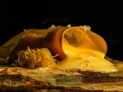 Food Life - Piatti Ritratti